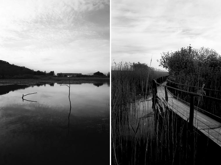Oasi di Tanali lago e canneto
