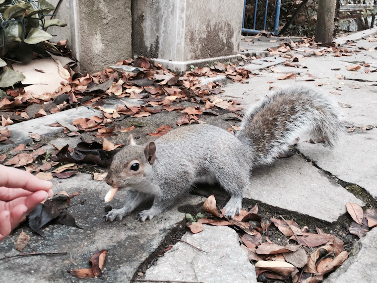 Torino Parco del Valentino scoiattolo