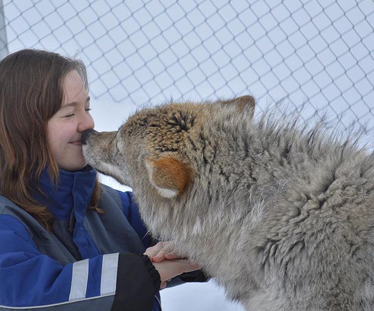 bacio lupo