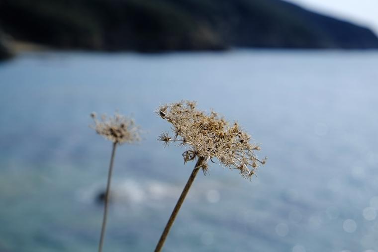 Buca delle Fate fiori