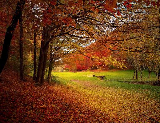 autunno-copertina