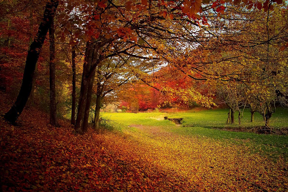 Viaggiare in autunno