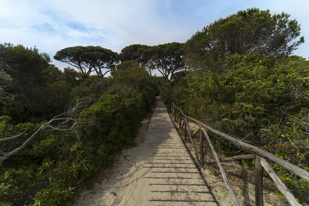 Spiaggia Nano Verde pineta